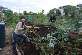 Radha and Uri raking out manure