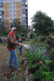 Hugh watering the manured hugels